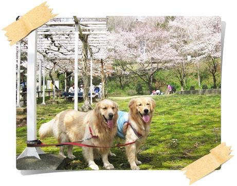 ふきやま公園6