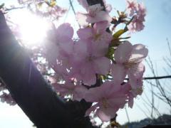 0226kawazu1.jpg
