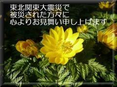 0314fukujyu2.jpg