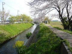0413sibasaku12.jpg