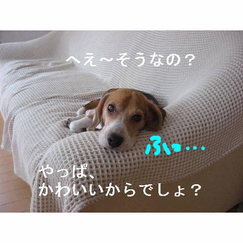 kawaiikara.jpg