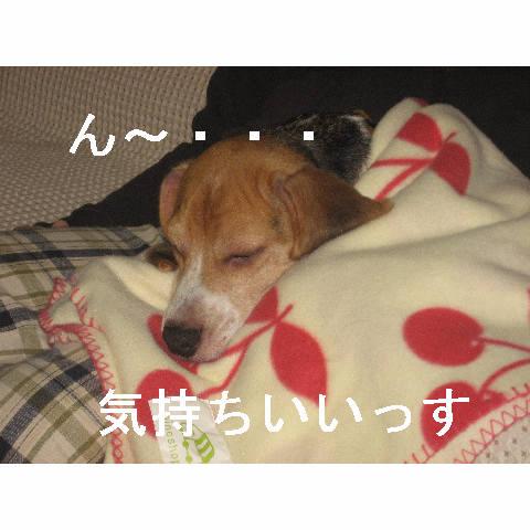 kimoti.jpg