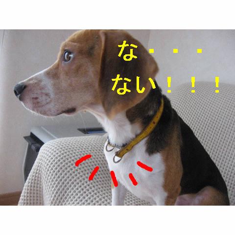 naiyo.jpg