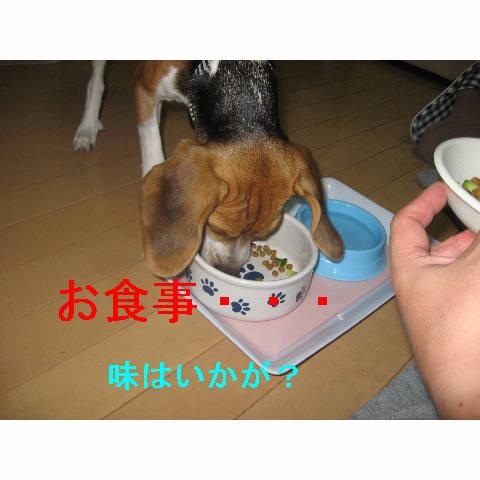 osyokuji.jpg