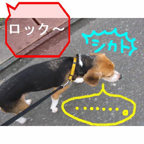 sikato_20080901092130.jpg