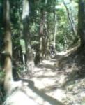 森。。。ハイキング
