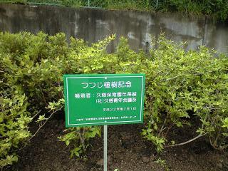つつじ植樹