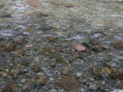 川遊びへ(5)
