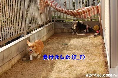 2009010709.jpg