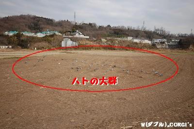 2009012805.jpg