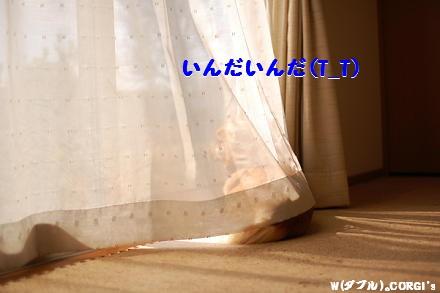 2009031711.jpg