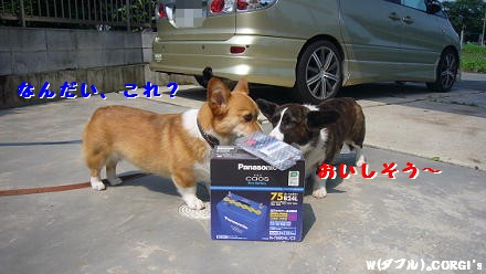 2009062501.jpg