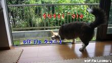 2009072506.jpg