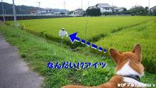 2009090607.jpg