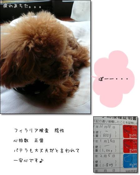 20090205-1.jpg