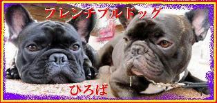 sorakuro_edited-6.jpg
