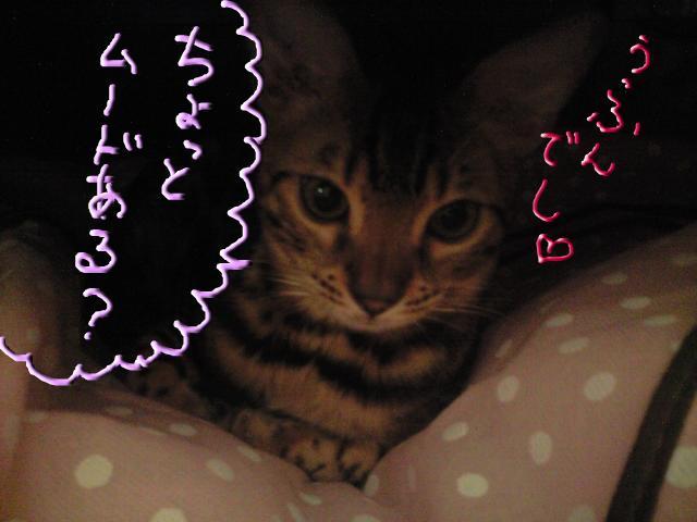 snap_rosecatfrog_201012162046.jpg