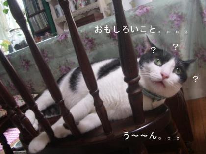 にゃんこ 1207
