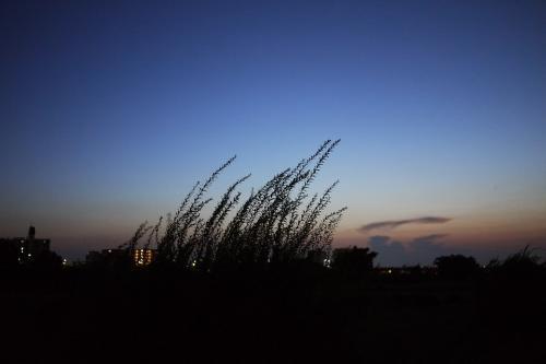 20110716_6.jpg