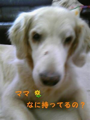 20100321153027