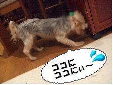 57-7_20080930004755.jpg