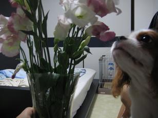 お花って綺麗でしゅね