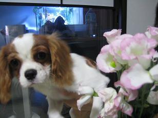 お花とポーズ1