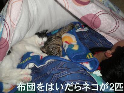 ネコと寝る