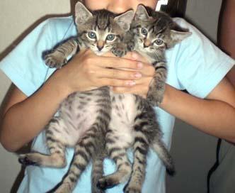 090614子猫1