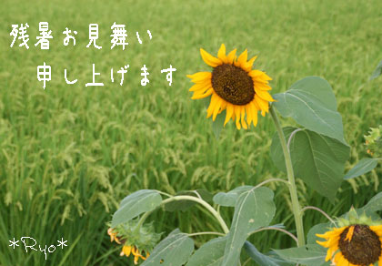 IMG_5696のコピーのコピー