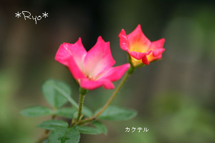 IMG_5993のコピー