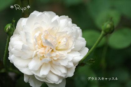 IMG_5996のコピー