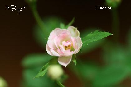 IMG_6053のコピー
