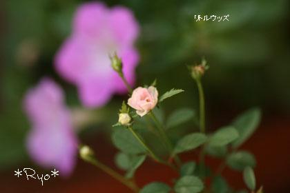 IMG_6028のコピー