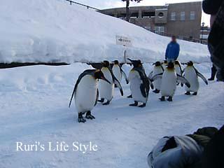 ペンギン集団