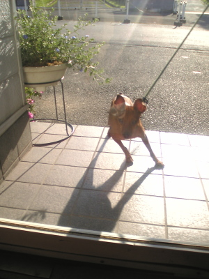 アクアの朝散歩@コビパン