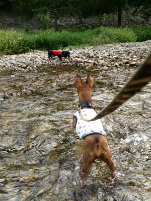 アクア&バブちゃん@リステルパークの渓流(観音寺川)