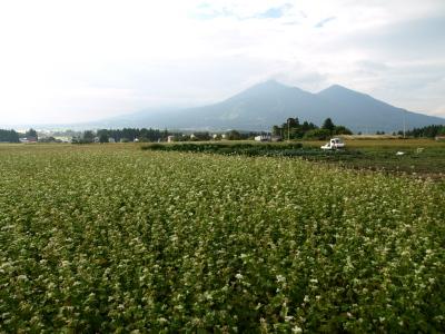猪苗代ハーブ園の蕎麦畑と磐梯山