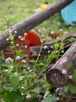 石釜ピザ・カフェ くるみの樹