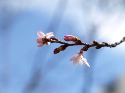桜♪ 第2回あぐりカフェ in 野口英世青春広場