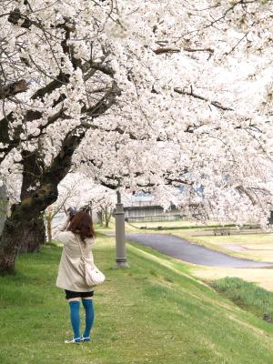 宮川の千本桜_2009/04/17