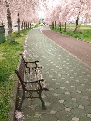 日中線記念自転車歩行者道のしだれ桜並木