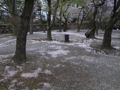 「はっちさんを探せ!(笑)」 鶴ヶ城公園の桜