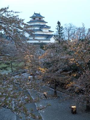 鶴ヶ城公園の桜ライトアップ(葉桜)