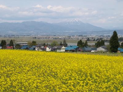菜の花畑と磐梯山@会津美里町