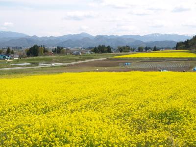 菜の花畑@会津美里町