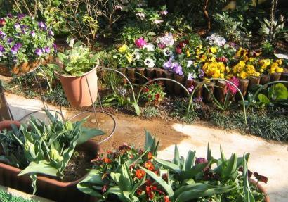 過密の花園