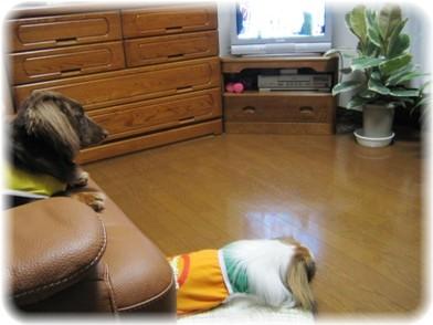 TV見てるのね。