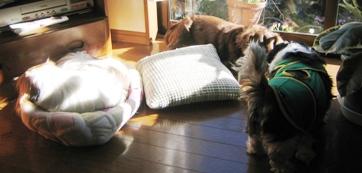 陽だまり犬