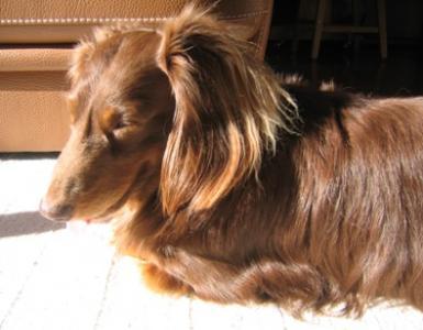 陽だまり犬2